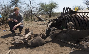 Pool picture by Paul Edwards The Sun London UK  Prince Harry visiting a crime scene of a rhino  killed by poachers in Kruger National Park South Africa . The Prince visit the scene with the forensic team . See story by Emily Andrews  Picture by Paul Edwards .